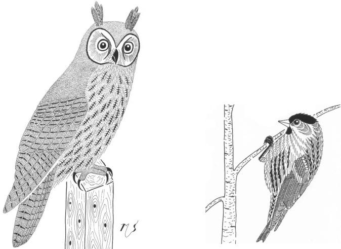 Prečo výr ušiačik žmúri veľkými okáľmi text a perokresby